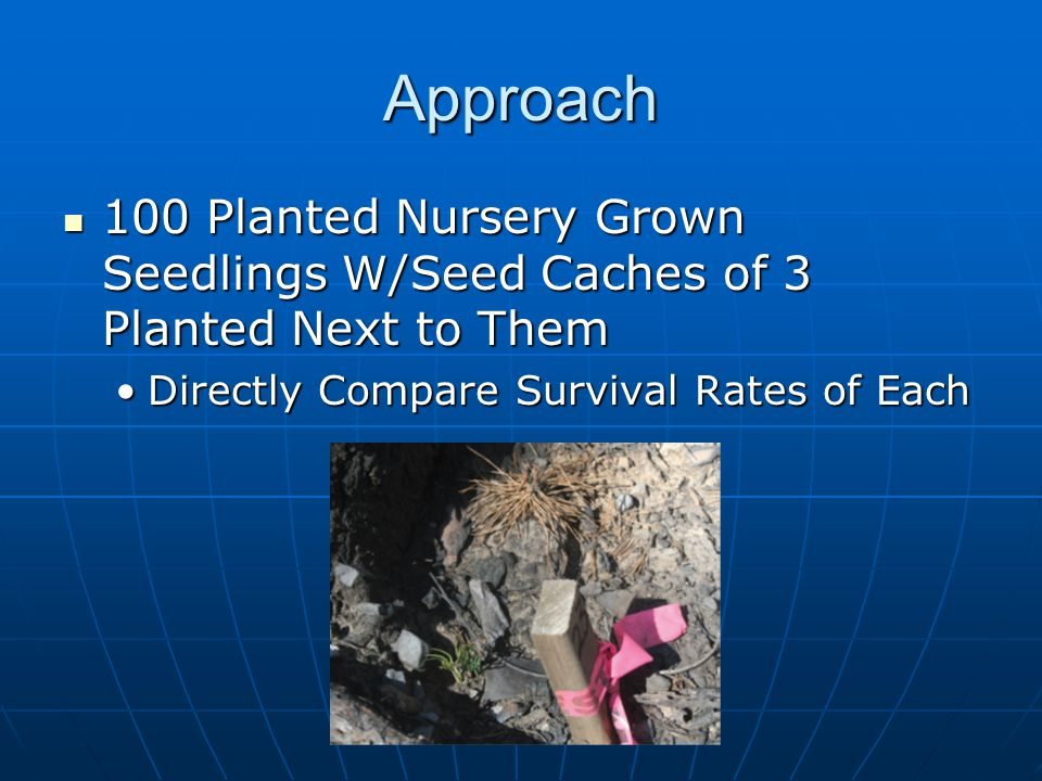 Approach 100 Planted Nursery Grown Seedlings W/Seed Caches of 3 Planted Next to Them 100 Planted Nursery Grown Seedlings W/Seed Caches of 3 Planted Next to Them Directly Compare Survival Rates of EachDirectly Compare Survival Rates of Each
