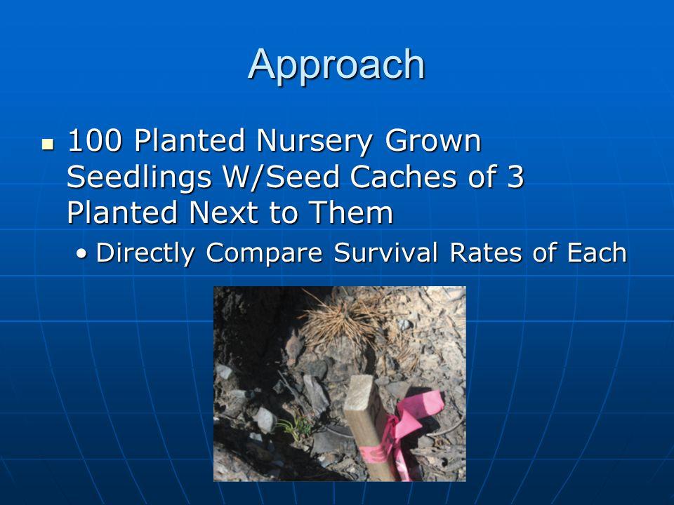 Approach 100 Planted Nursery Grown Seedlings W/Seed Caches of 3 Planted Next to Them 100 Planted Nursery Grown Seedlings W/Seed Caches of 3 Planted Ne