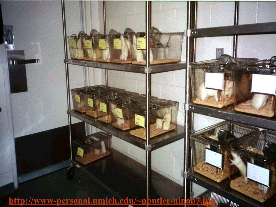 ithttp://www-personal.umich.edu/~nbutler/ninab7.jpghttp://www-personal.umich.edu/~nbutler/ninab7.jpg