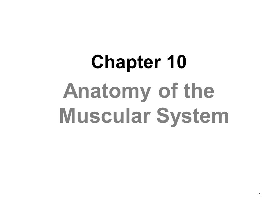1 Chapter 10 Anatomy of the Muscular System