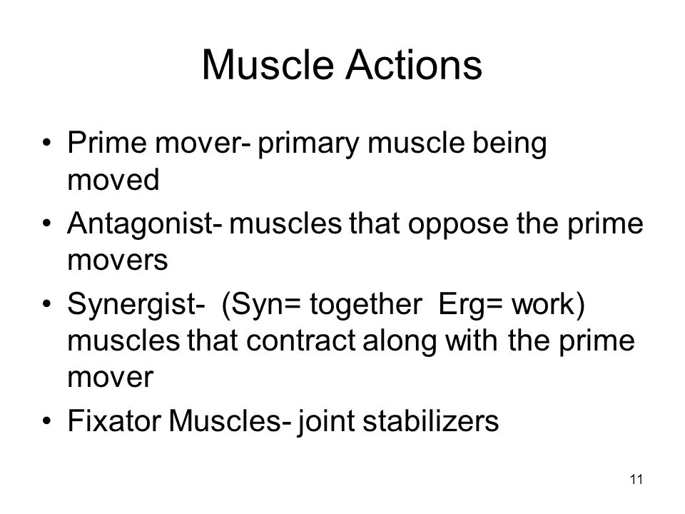 Muscle Actions Prime mover- primary muscle being moved Antagonist- muscles that oppose the prime movers Synergist- (Syn= together Erg= work) muscles that contract along with the prime mover Fixator Muscles- joint stabilizers 11