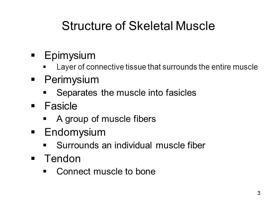 Structure of Skeletal Muscle  Epimysium  Layer of connective tissue that surrounds the entire muscle  Perimysium  Separates the muscle into fasicl