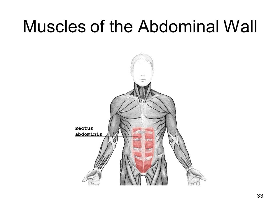 Muscles of the Abdominal Wall 33