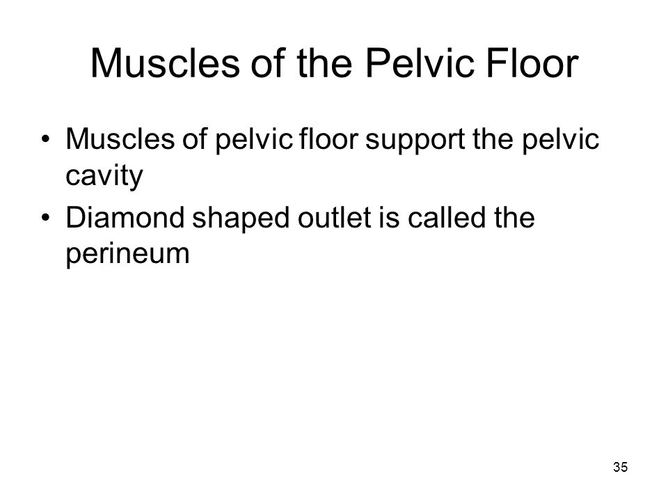 Muscles of the Pelvic Floor Muscles of pelvic floor support the pelvic cavity Diamond shaped outlet is called the perineum 35