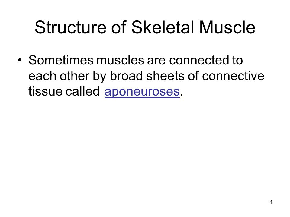 Structure of Skeletal Muscle Sometimes muscles are connected to each other by broad sheets of connective tissue called aponeuroses. 4