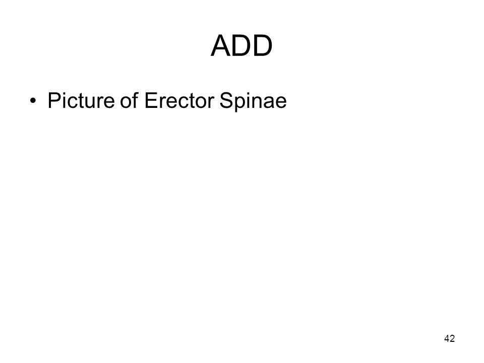 ADD Picture of Erector Spinae 42