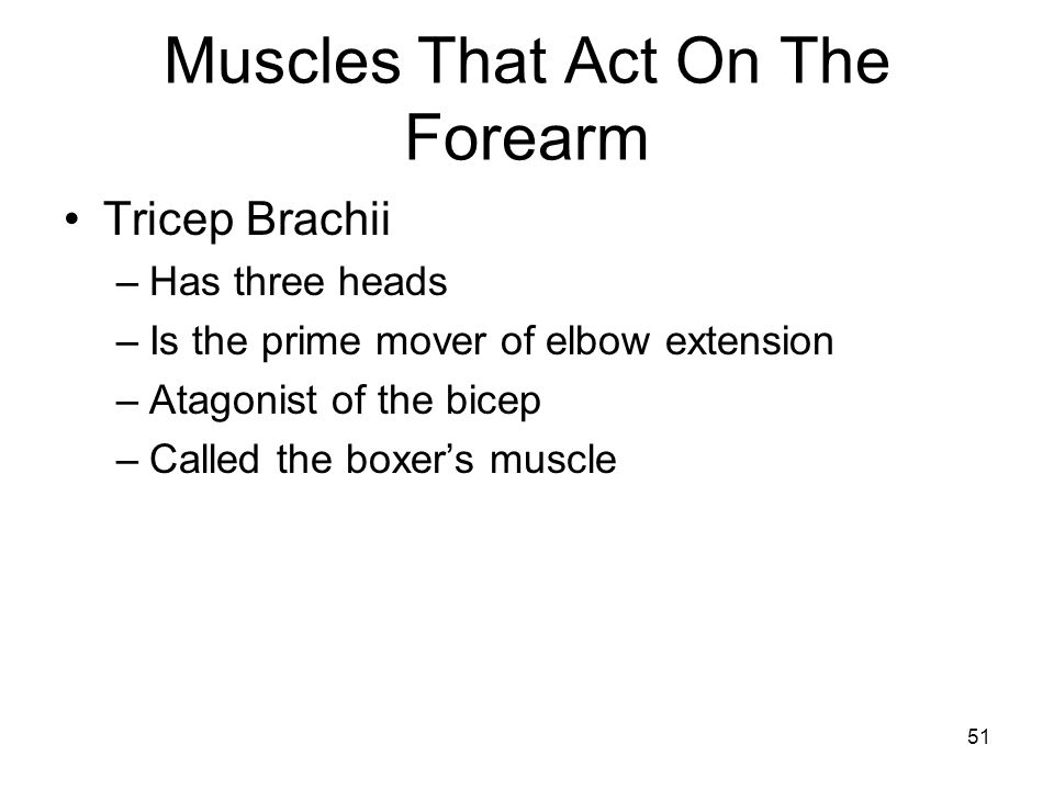 Muscles That Act On The Forearm Tricep Brachii –Has three heads –Is the prime mover of elbow extension –Atagonist of the bicep –Called the boxer's mus
