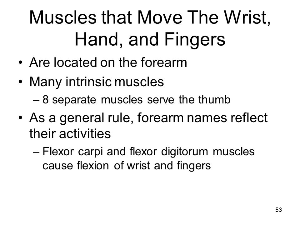 Muscles that Move The Wrist, Hand, and Fingers Are located on the forearm Many intrinsic muscles –8 separate muscles serve the thumb As a general rule