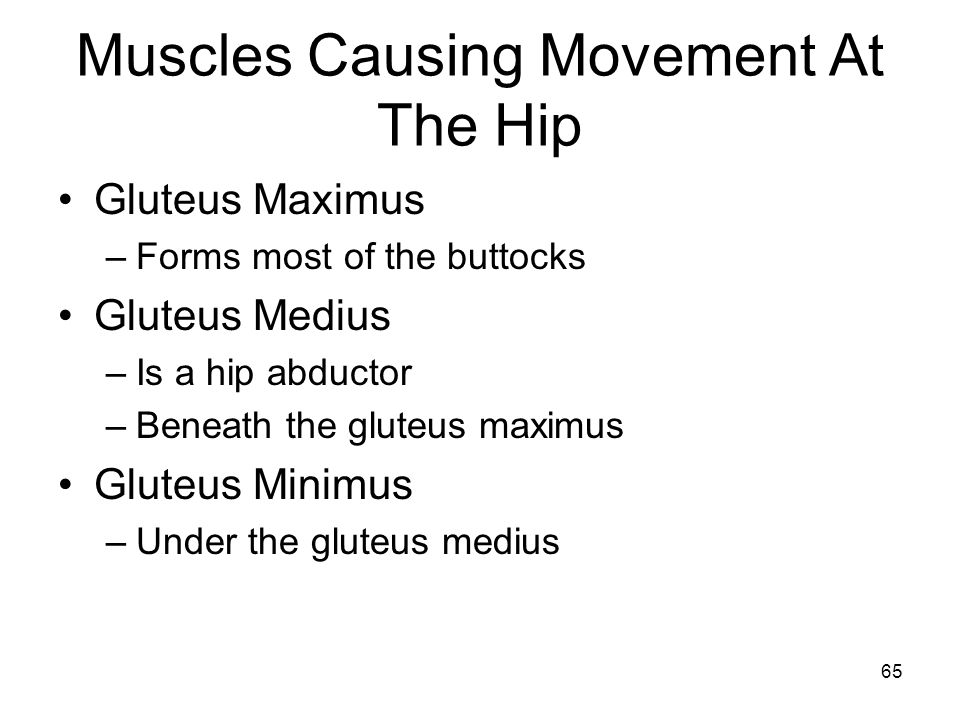Muscles Causing Movement At The Hip Gluteus Maximus –Forms most of the buttocks Gluteus Medius –Is a hip abductor –Beneath the gluteus maximus Gluteus Minimus –Under the gluteus medius 65