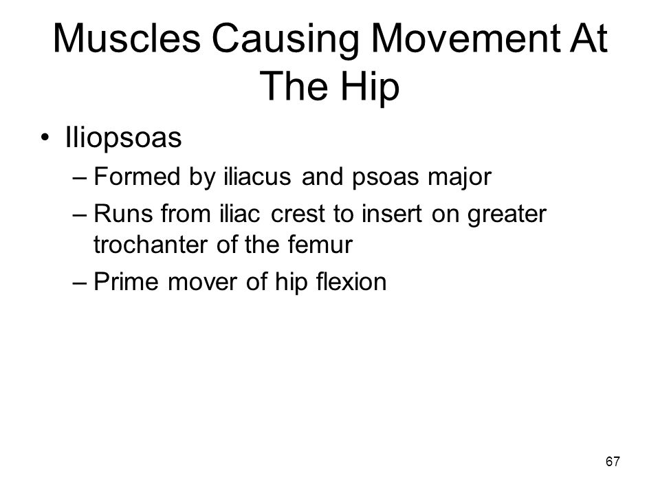 Muscles Causing Movement At The Hip Iliopsoas –Formed by iliacus and psoas major –Runs from iliac crest to insert on greater trochanter of the femur –