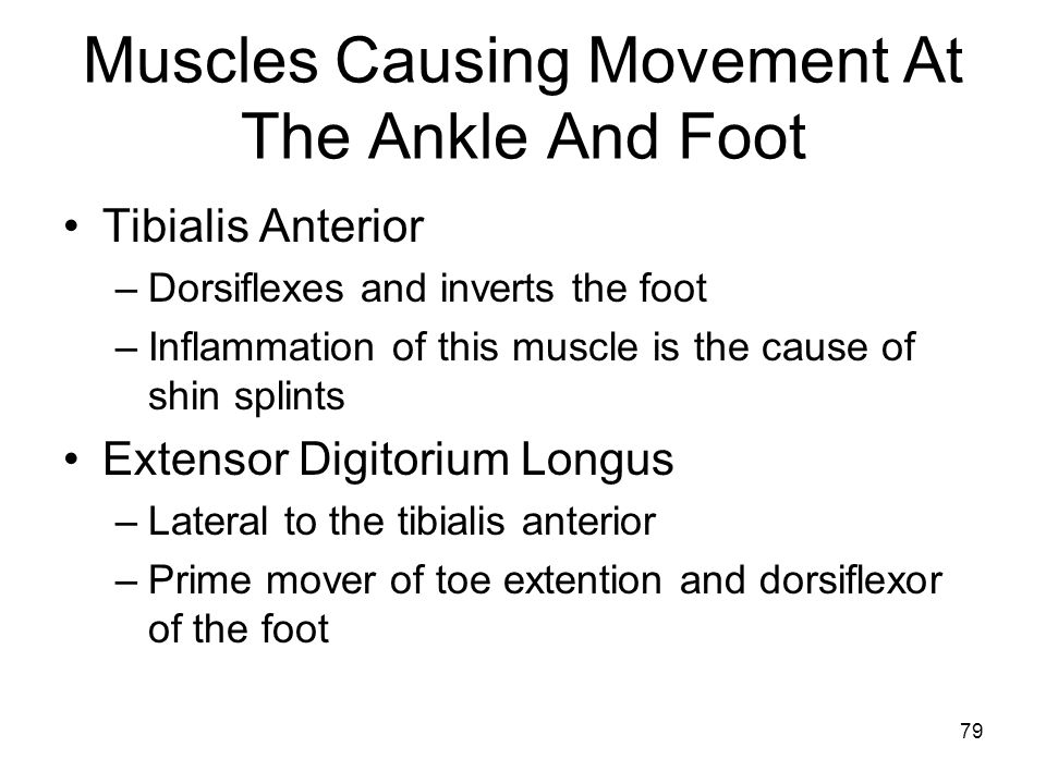 Muscles Causing Movement At The Ankle And Foot Tibialis Anterior –Dorsiflexes and inverts the foot –Inflammation of this muscle is the cause of shin splints Extensor Digitorium Longus –Lateral to the tibialis anterior –Prime mover of toe extention and dorsiflexor of the foot 79