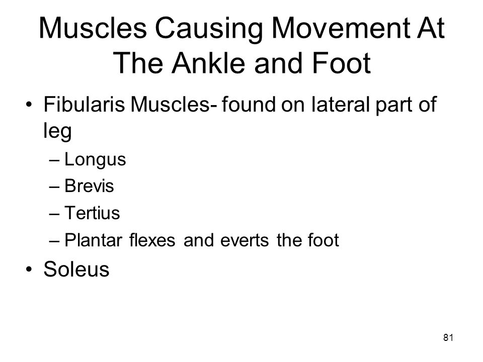 Muscles Causing Movement At The Ankle and Foot Fibularis Muscles- found on lateral part of leg –Longus –Brevis –Tertius –Plantar flexes and everts the