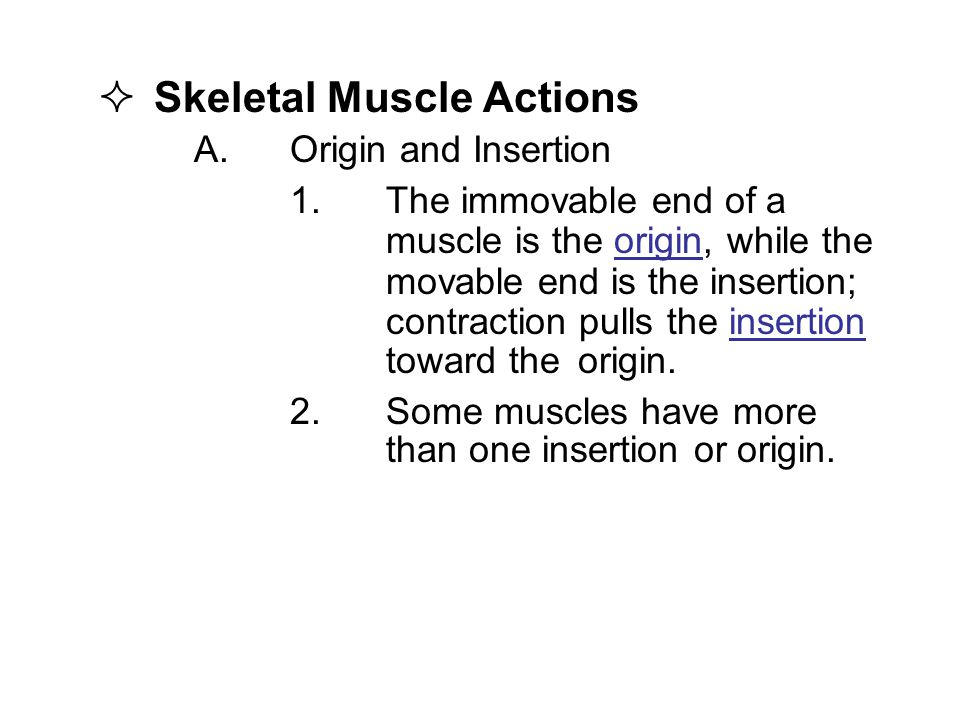  Skeletal Muscle Actions A.Origin and Insertion 1.The immovable end of a muscle is the origin, while the movable end is the insertion; contraction pulls the insertion toward the origin.