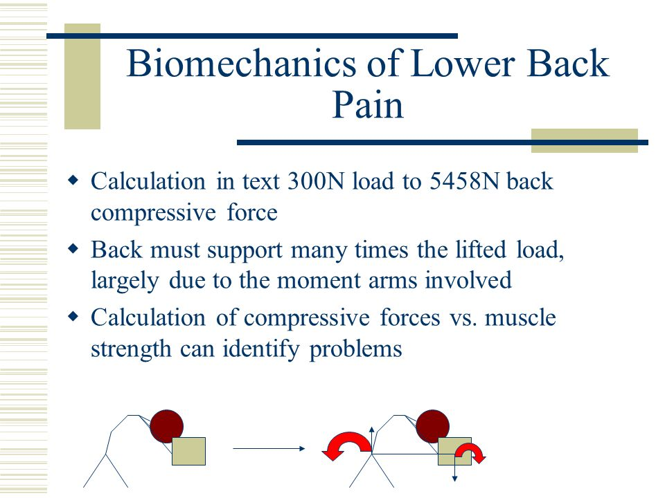 Biomechanics of Lower Back Pain  Calculation in text 300N load to 5458N back compressive force  Back must support many times the lifted load, largely due to the moment arms involved  Calculation of compressive forces vs.