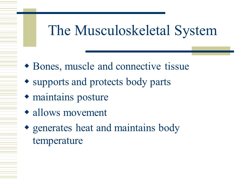 The Musculoskeletal System  Bones, muscle and connective tissue  supports and protects body parts  maintains posture  allows movement  generates