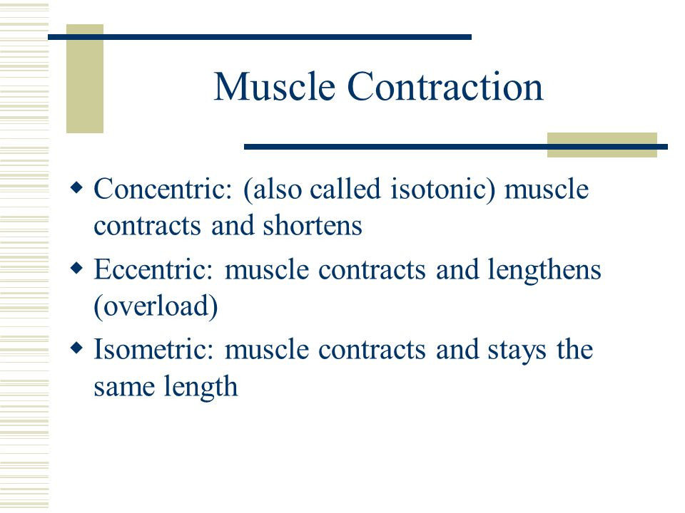 Muscle Contraction  Concentric: (also called isotonic) muscle contracts and shortens  Eccentric: muscle contracts and lengthens (overload)  Isometric: muscle contracts and stays the same length