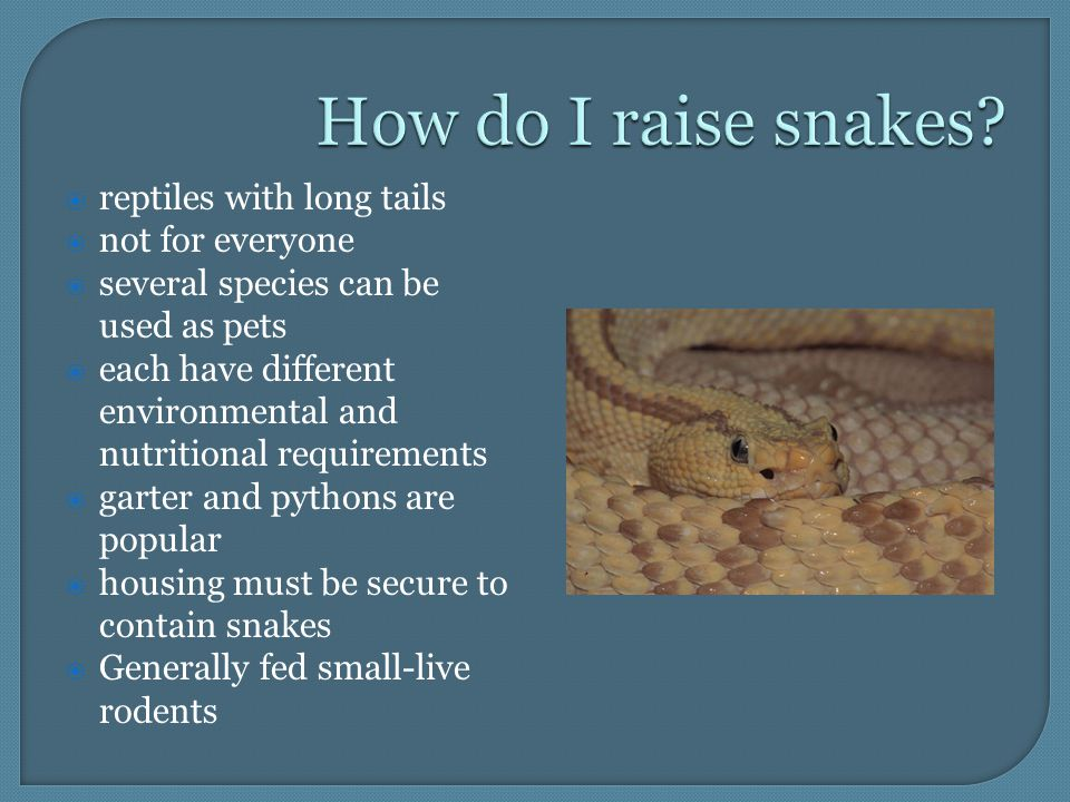  reptiles with long tails  not for everyone  several species can be used as pets  each have different environmental and nutritional requirements  garter and pythons are popular  housing must be secure to contain snakes  Generally fed small-live rodents