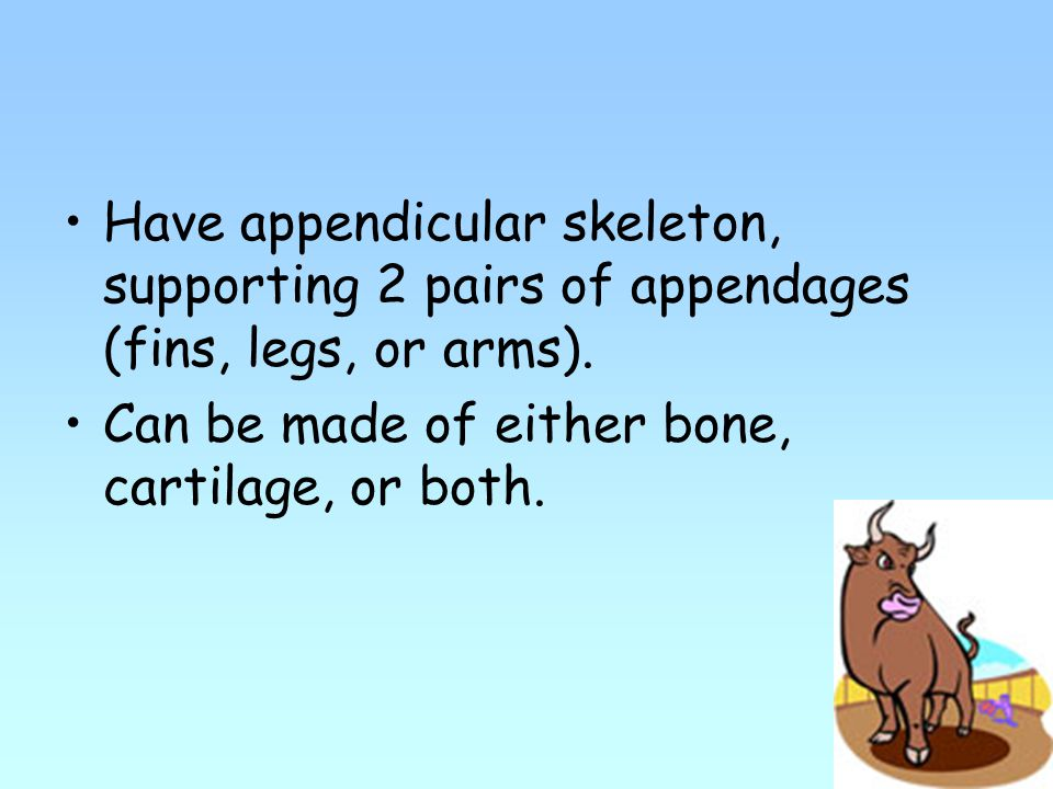 Have appendicular skeleton, supporting 2 pairs of appendages (fins, legs, or arms).