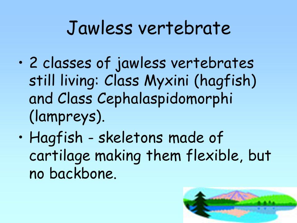 Jawless vertebrate 2 classes of jawless vertebrates still living: Class Myxini (hagfish) and Class Cephalaspidomorphi (lampreys).