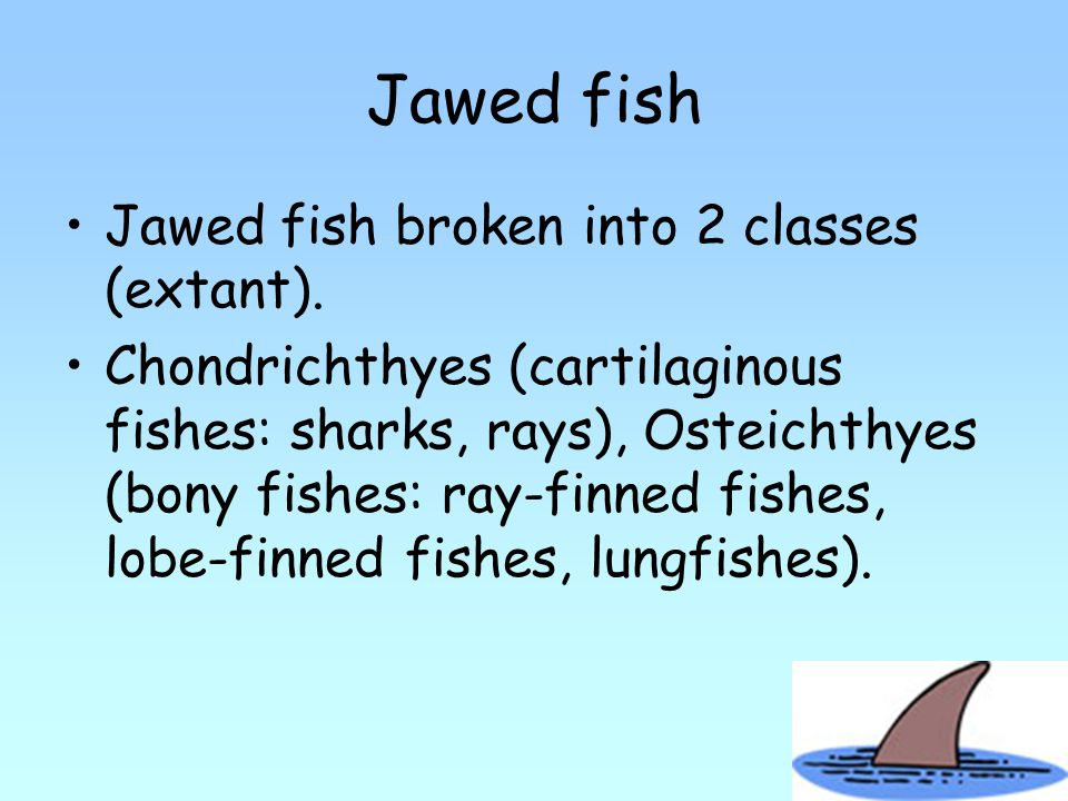 Jawed fish Jawed fish broken into 2 classes (extant).