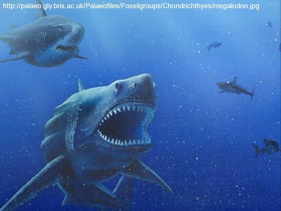 http://palaeo.gly.bris.ac.uk/Palaeofiles/Fossilgroups/Chondrichthyes/megalodon.jpg