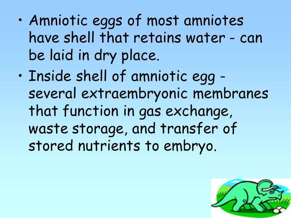 Amniotic eggs of most amniotes have shell that retains water - can be laid in dry place.