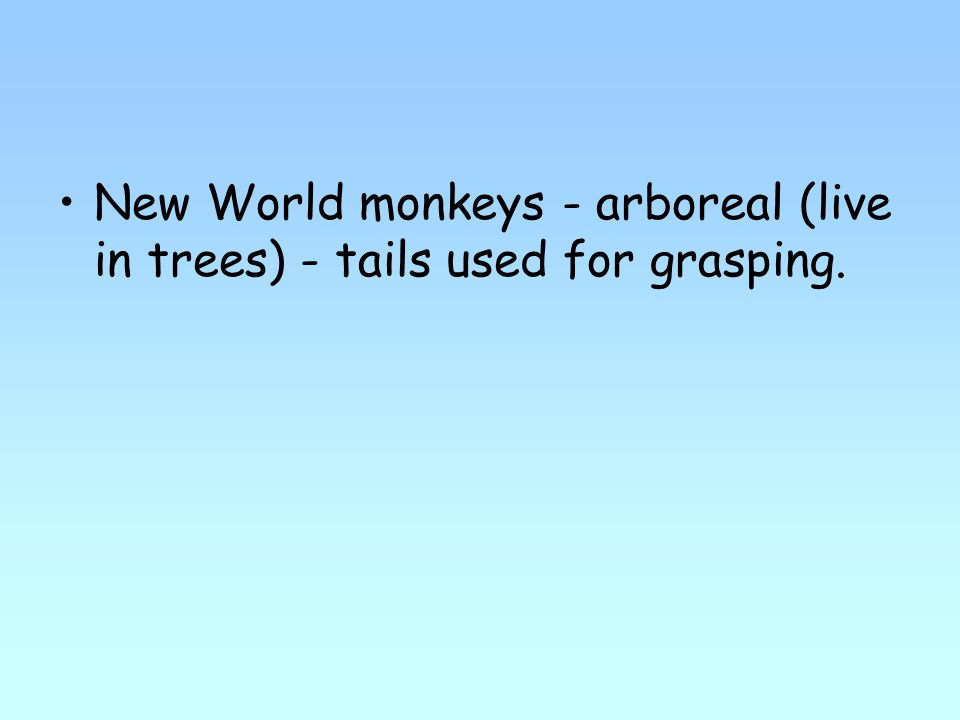 New World monkeys - arboreal (live in trees) - tails used for grasping.