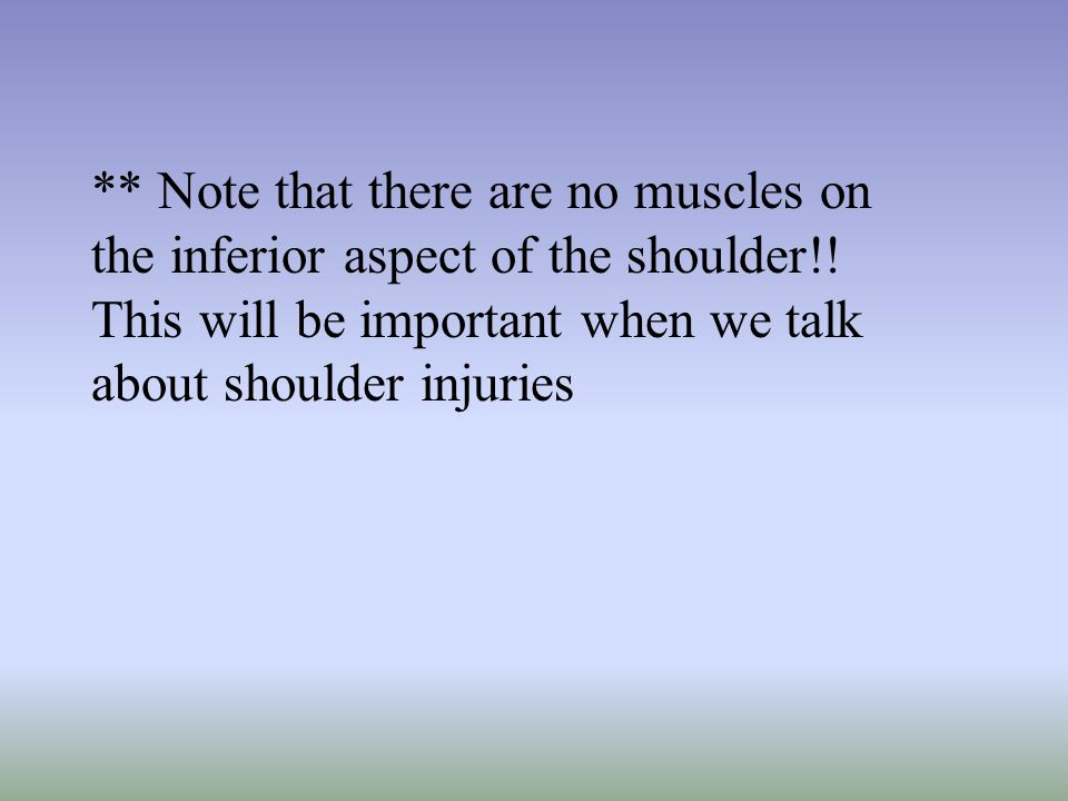 ** Note that there are no muscles on the inferior aspect of the shoulder!.