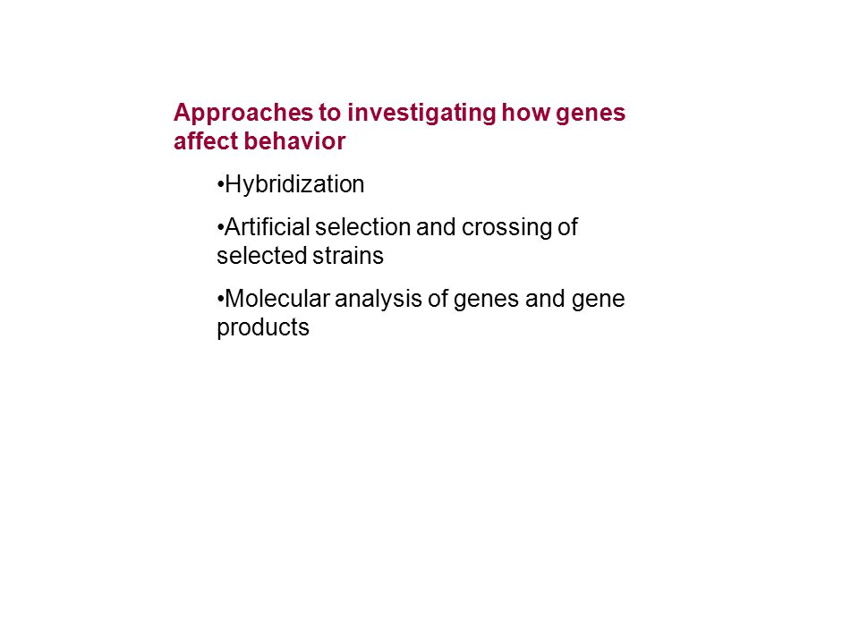 Approaches to investigating how genes affect behavior Hybridization Artificial selection and crossing of selected strains Molecular analysis of genes