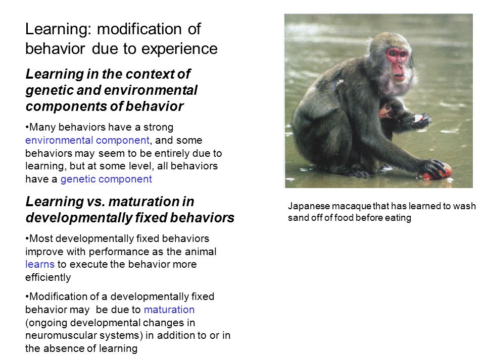 Habituation Habituation is a simple form of learning in which responsiveness to a stimulus is lost animal learns to ignore a repeated, irrelevant stimulus, which is adaptive… fitness is probably increased through habituation, by allowing animal's nervous system to focus on important stimuli that signal food, mates, or danger, instead of wasting time or energy on barrage of stimuli that are irrelevant to its survival and reproduction After repeated safe encounters with vans transporting humans on photo safari, many animals, including giraffes, zebras, lions, and elephants, in the Serengeti learn to ignore them.