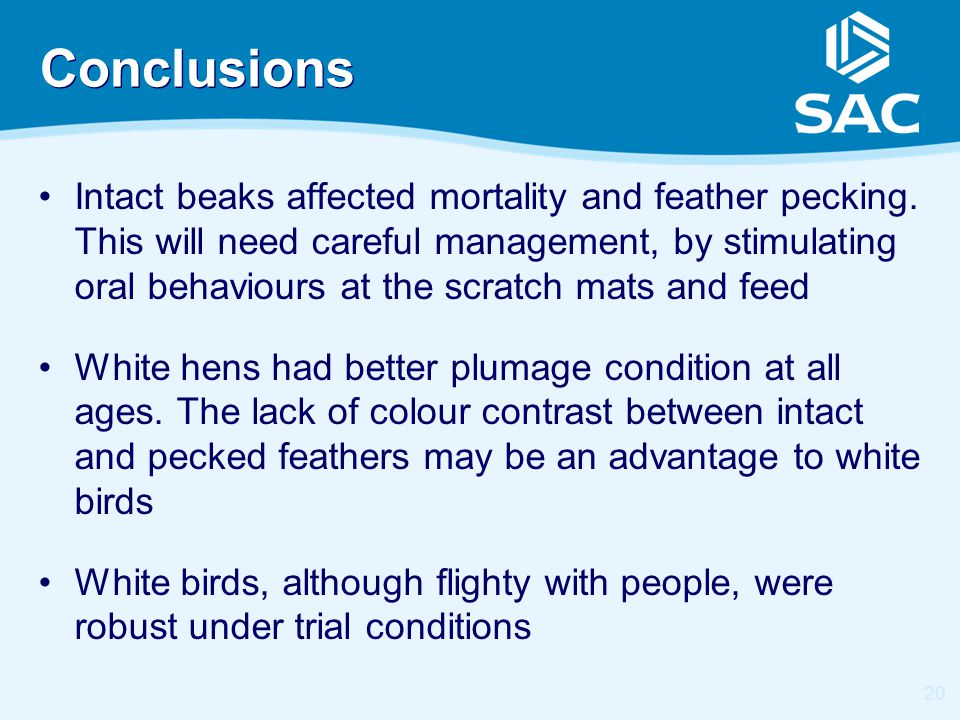 20 Conclusions Intact beaks affected mortality and feather pecking. This will need careful management, by stimulating oral behaviours at the scratch m