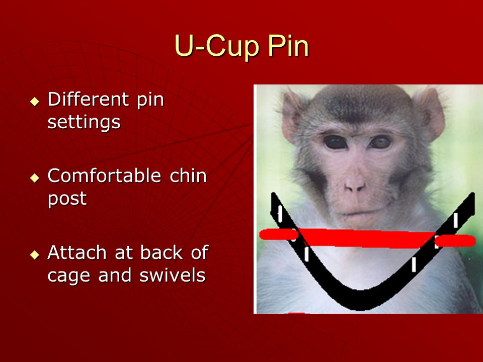 U-Cup Pin  Different pin settings  Comfortable chin post  Attach at back of cage and swivels