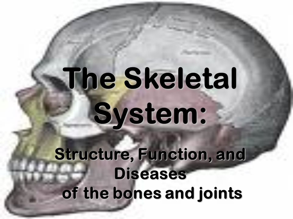 The Skeletal System: Structure, Function, and Diseases of the bones and joints of the bones and joints