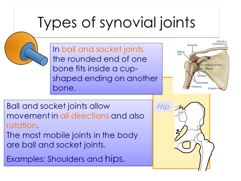 Types of synovial joints In ball and socket joints, the rounded end of one bone fits inside a cup- shaped ending on another bone.