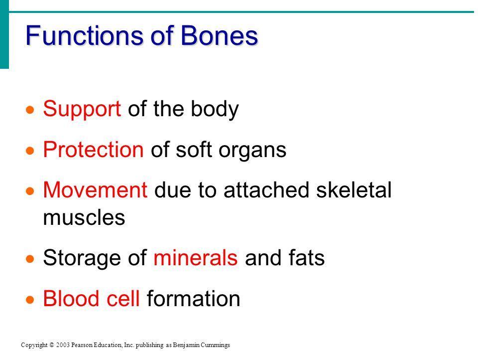 Functions of Bones Copyright © 2003 Pearson Education, Inc.