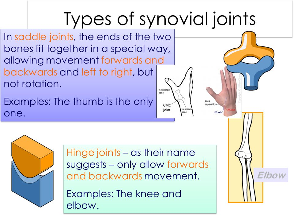 Types of synovial joints In saddle joints, the ends of the two bones fit together in a special way, allowing movement forwards and backwards and left to right, but not rotation.