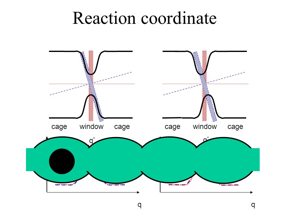 cage window cage βF(q) q q*q* cage window cage βF(q) q q*q* Reaction coordinate