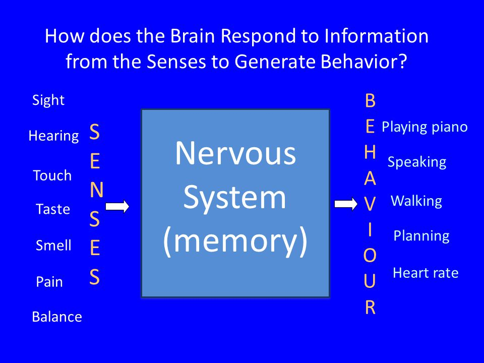 How does the Brain Respond to Information from the Senses to Generate Behavior.