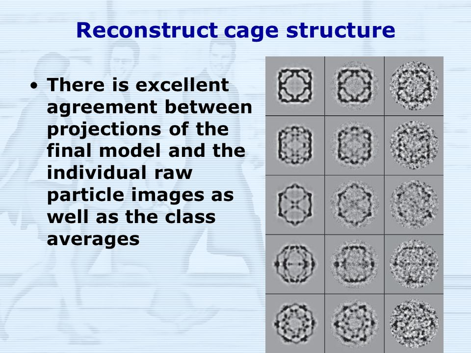 14 Reconstruct cage structure There is excellent agreement between projections of the final model and the individual raw particle images as well as the class averages