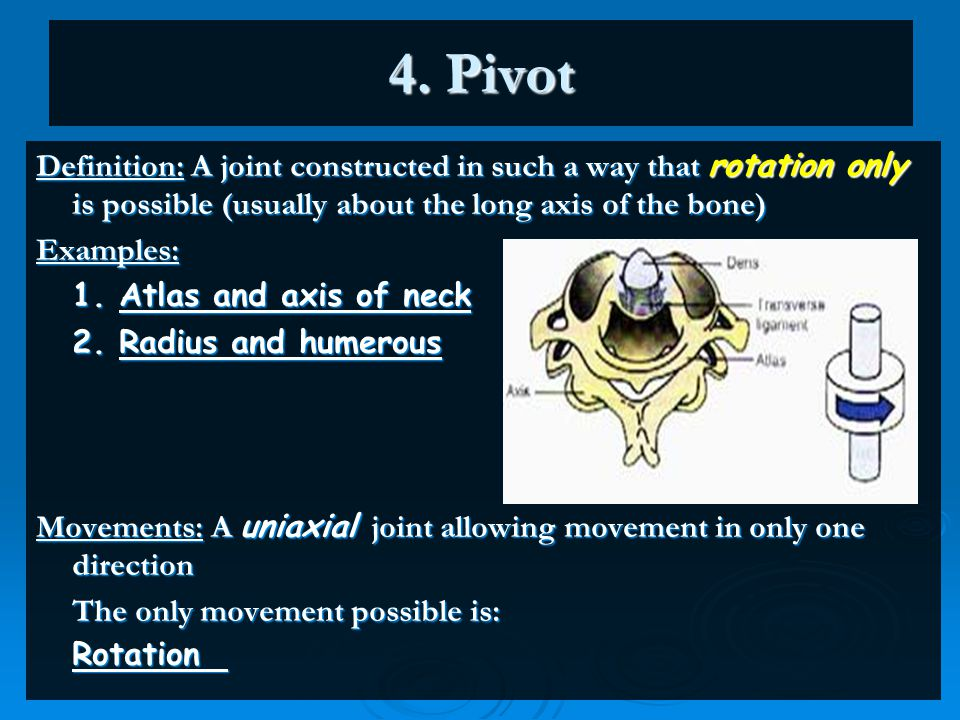 4. Pivot Definition: A joint constructed in such a way that rotation only is possible (usually about the long axis of the bone) Examples: 1. Atlas and