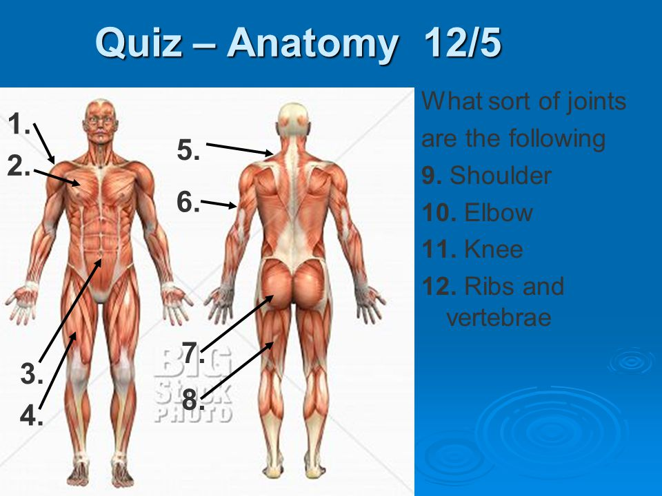 Quiz – Anatomy 12/5 What sort of joints are the following 9. Shoulder 10. Elbow 11. Knee 12. Ribs and vertebrae 1. 6. 7. 3. 2. 5. 4. 8.