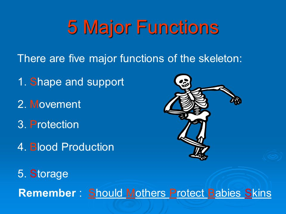 5 Major Functions There are five major functions of the skeleton: Remember : Should Mothers Protect Babies Skins 1. Shape and support 2. Movement 3. P