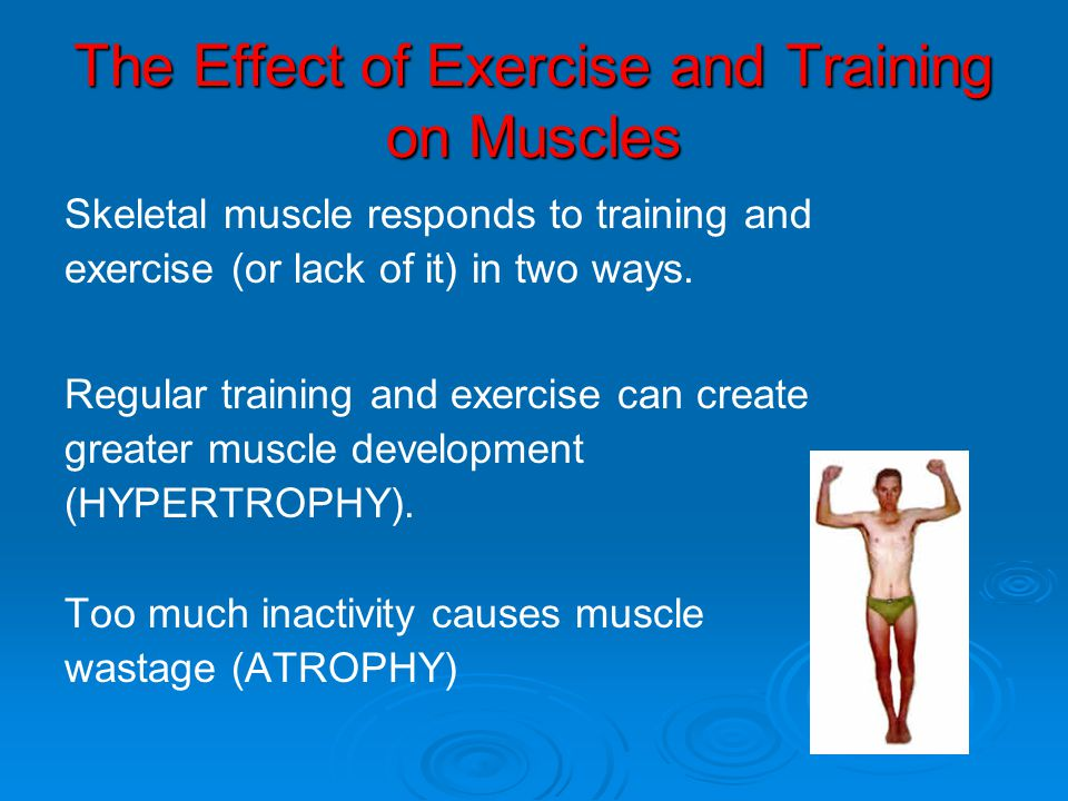 The Effect of Exercise and Training on Muscles Skeletal muscle responds to training and exercise (or lack of it) in two ways. Regular training and exe