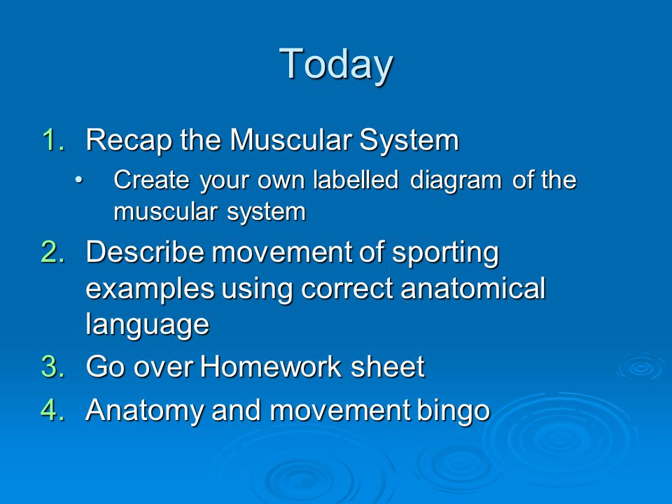 Today 1.Recap the Muscular System Create your own labelled diagram of the muscular systemCreate your own labelled diagram of the muscular system 2.Des