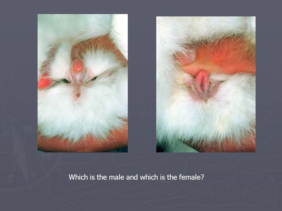 Which is the male and which is the female