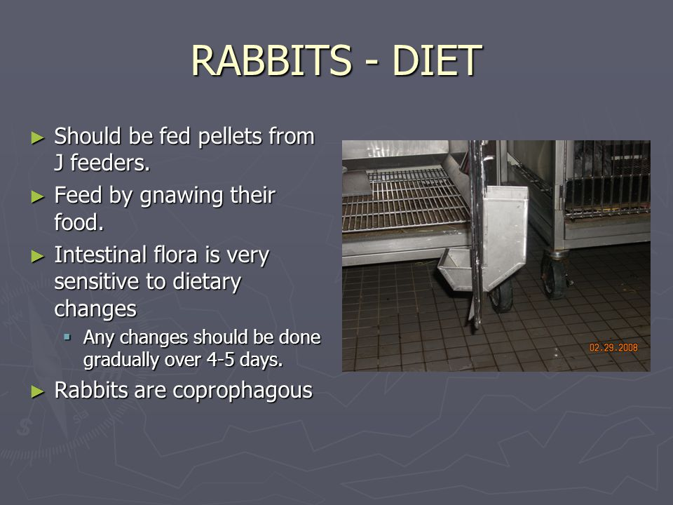 RABBITS - DIET ► Should be fed pellets from J feeders.