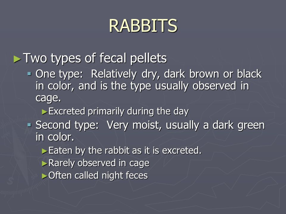 RABBITS ► Two types of fecal pellets  One type: Relatively dry, dark brown or black in color, and is the type usually observed in cage.