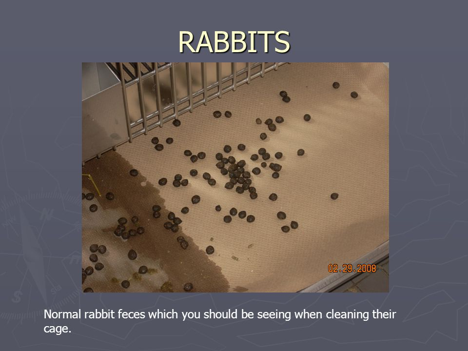 RABBITS Normal rabbit feces which you should be seeing when cleaning their cage.