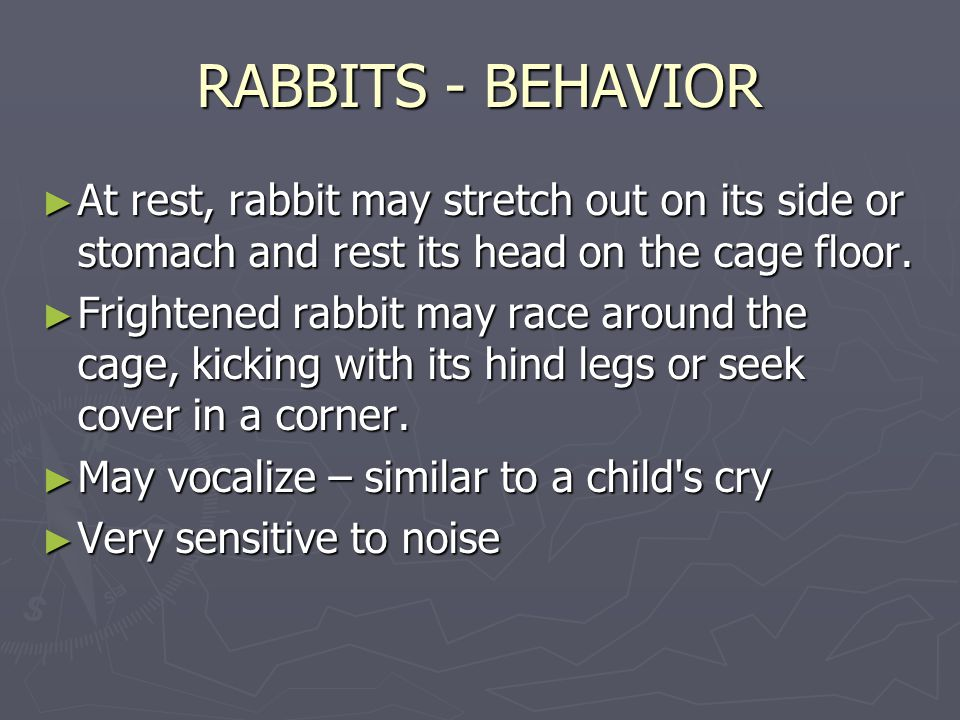 RABBITS - BEHAVIOR ► At rest, rabbit may stretch out on its side or stomach and rest its head on the cage floor.