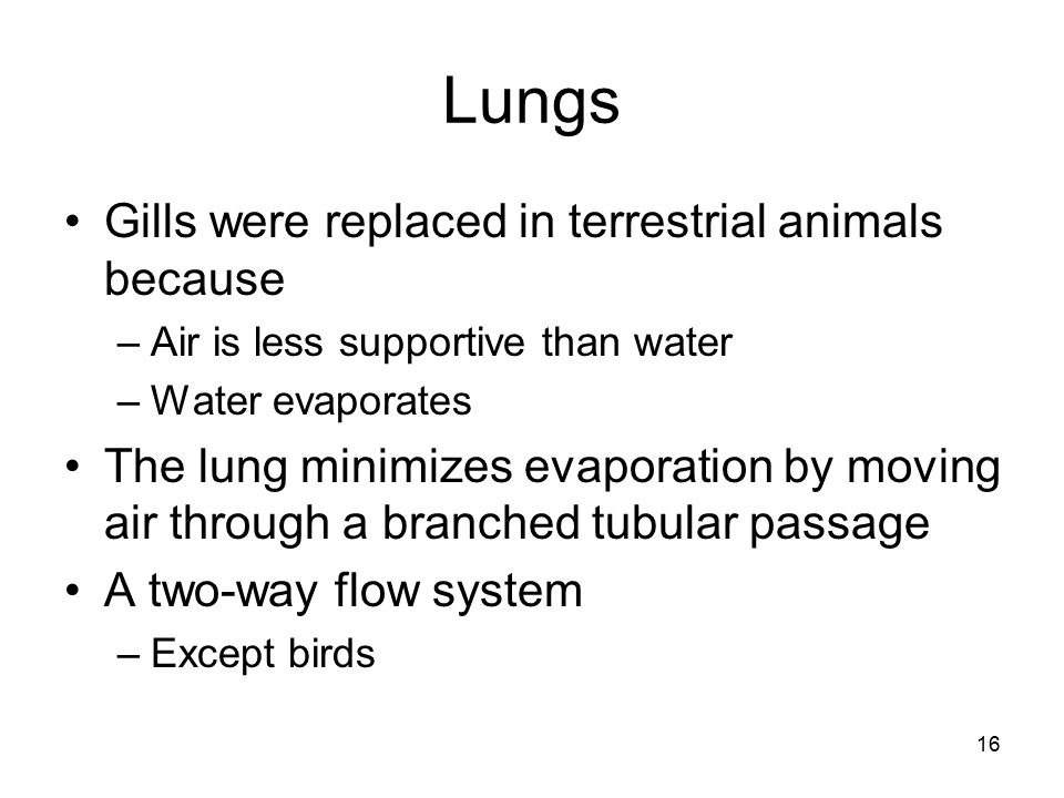 Lungs Gills were replaced in terrestrial animals because –Air is less supportive than water –Water evaporates The lung minimizes evaporation by moving